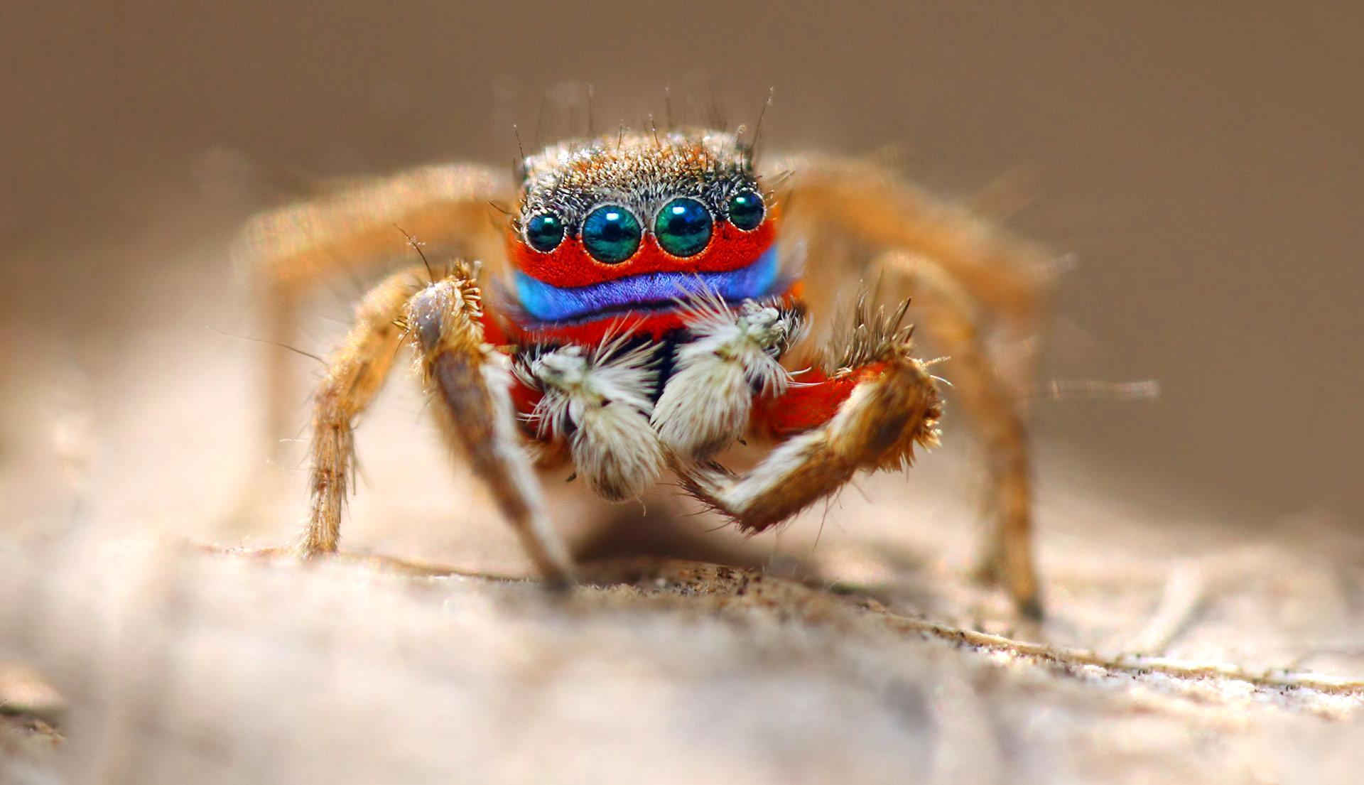 замечают, что фото паука в высоком разрешении того, каждая пятая