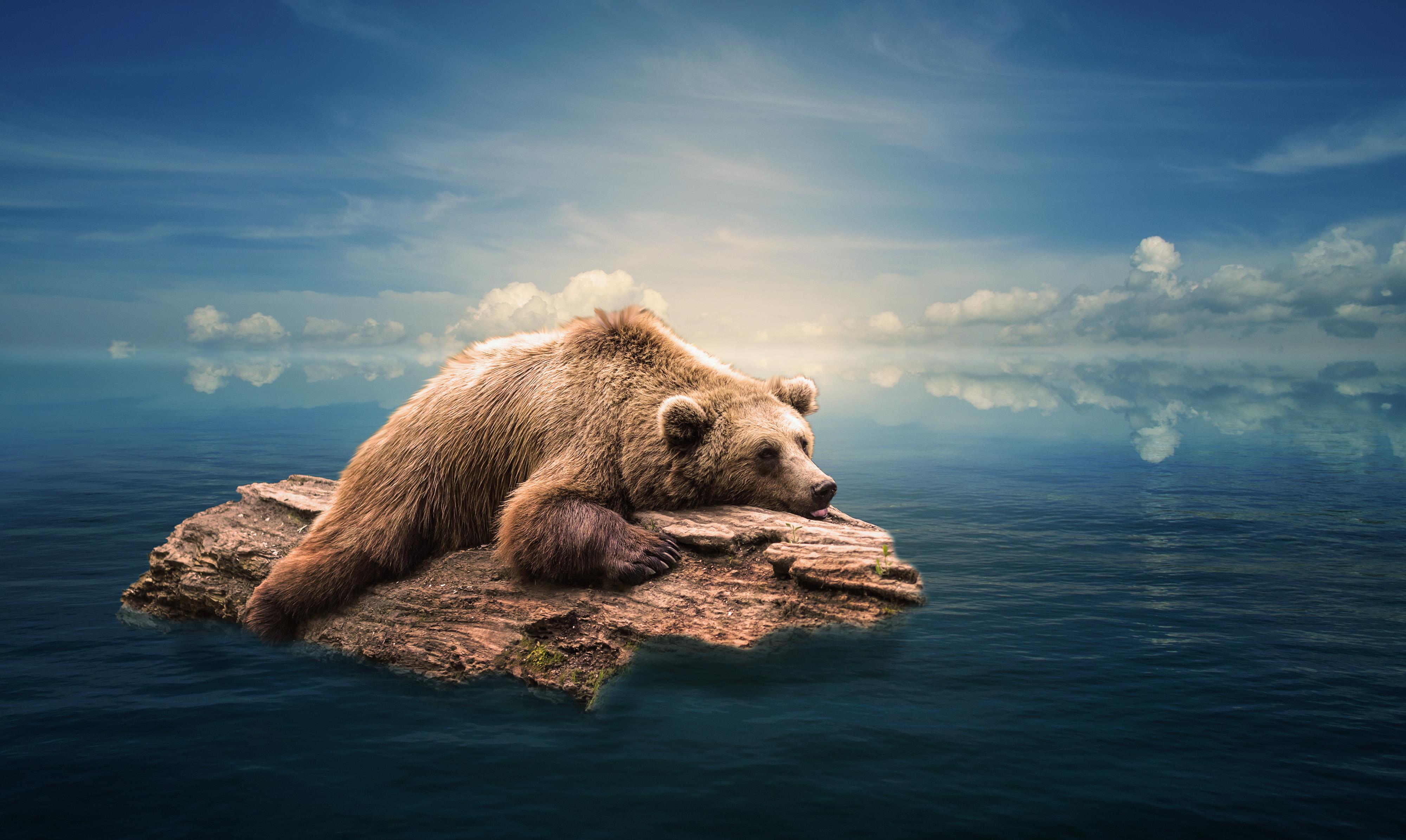 обои на рабочий стол медвежонок можно