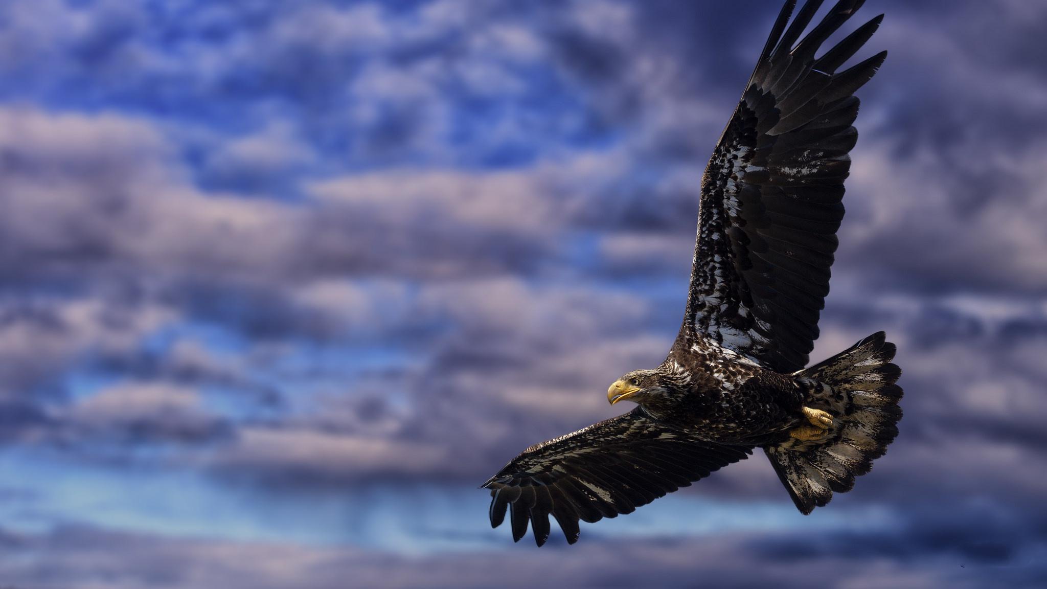 животных фото и картинки парящего орла стекло это прежде