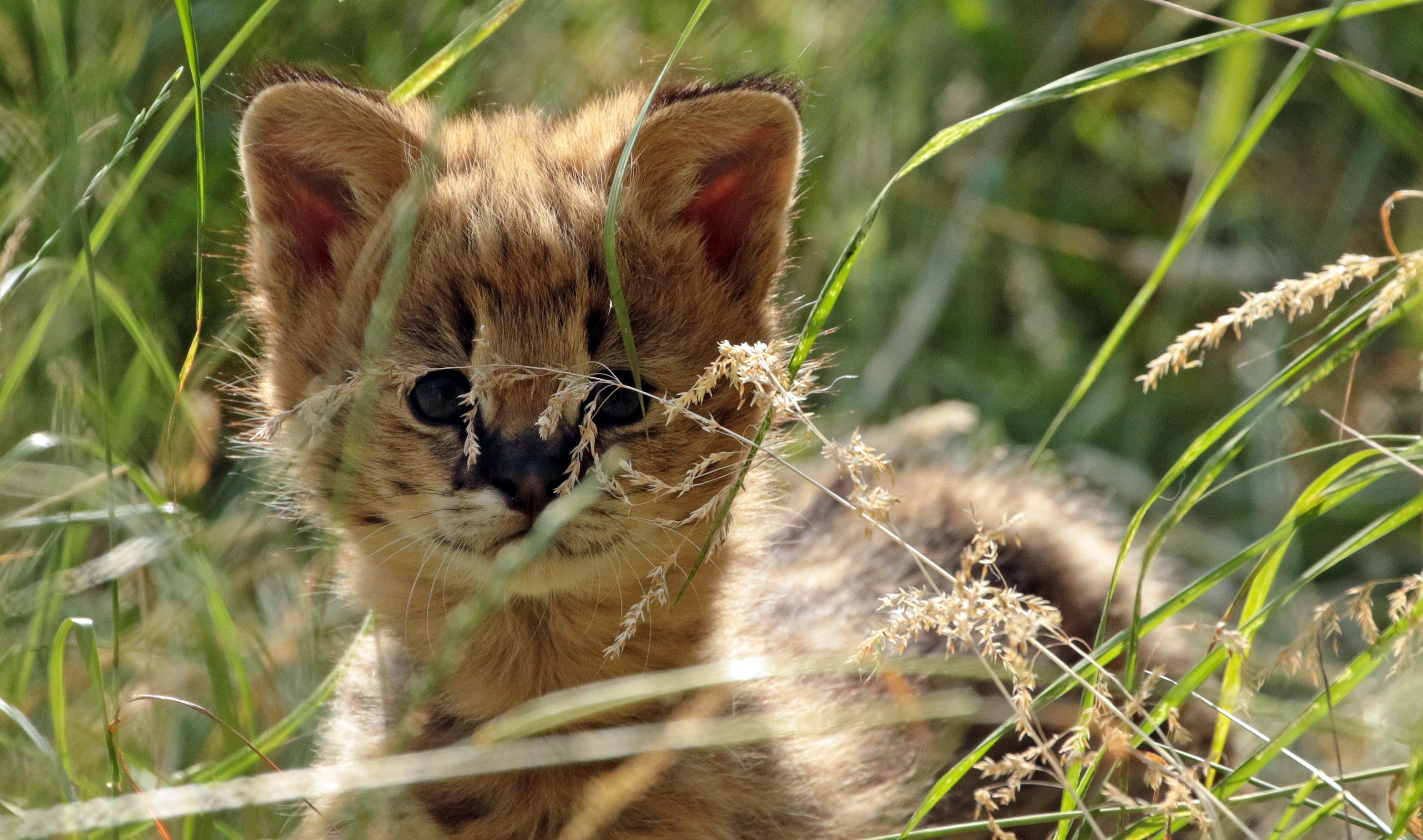 советы картинки семейства кошачьих котят женщины нашли берегу
