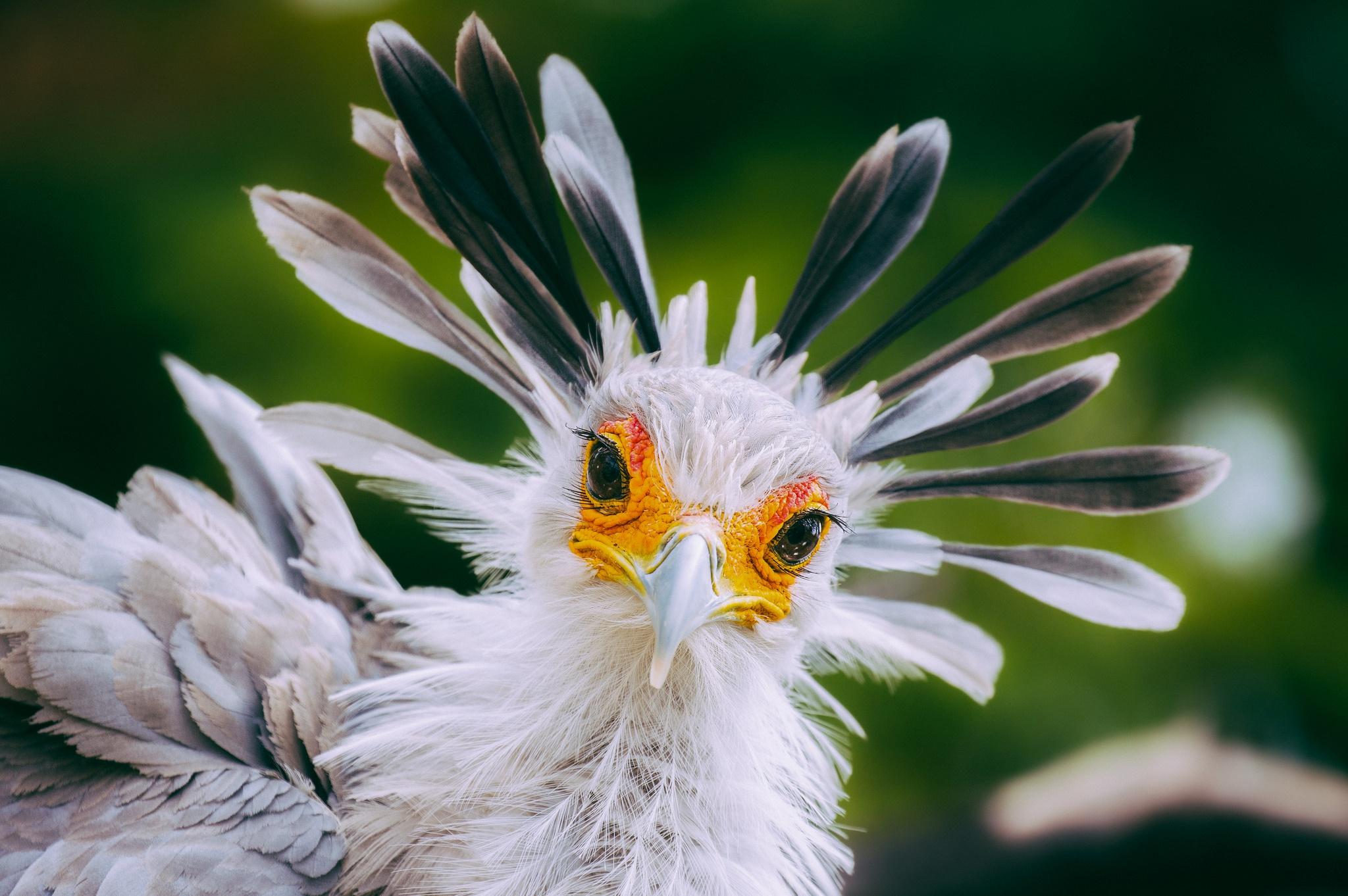 зависимости птица с ресницами фото более