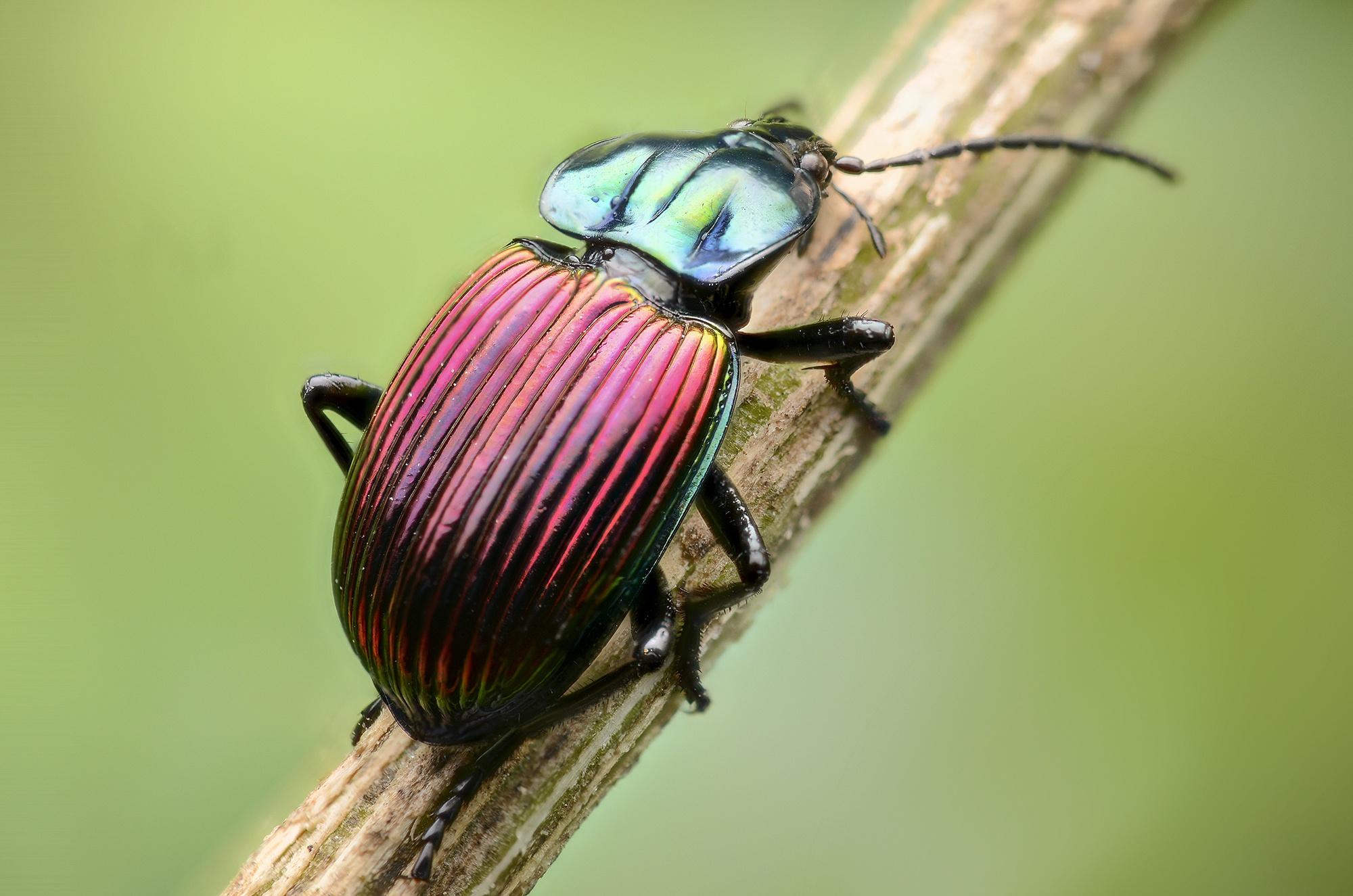 нашем жуки картинки макросъемка растр программа