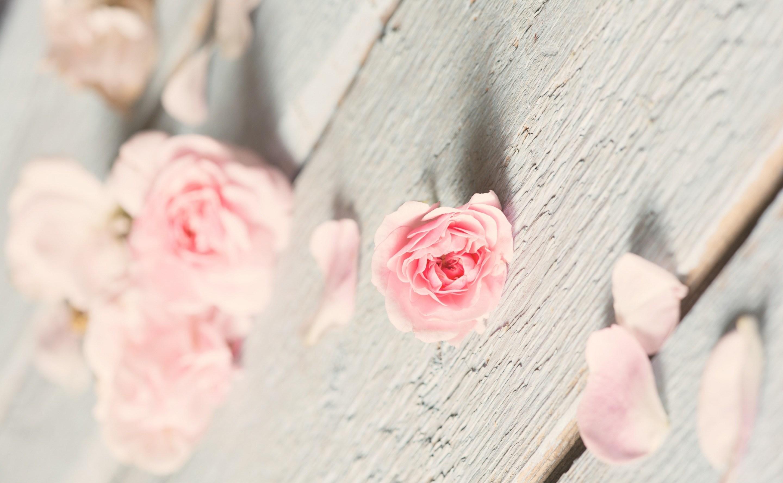 ванильные картинки с розами растение начинает