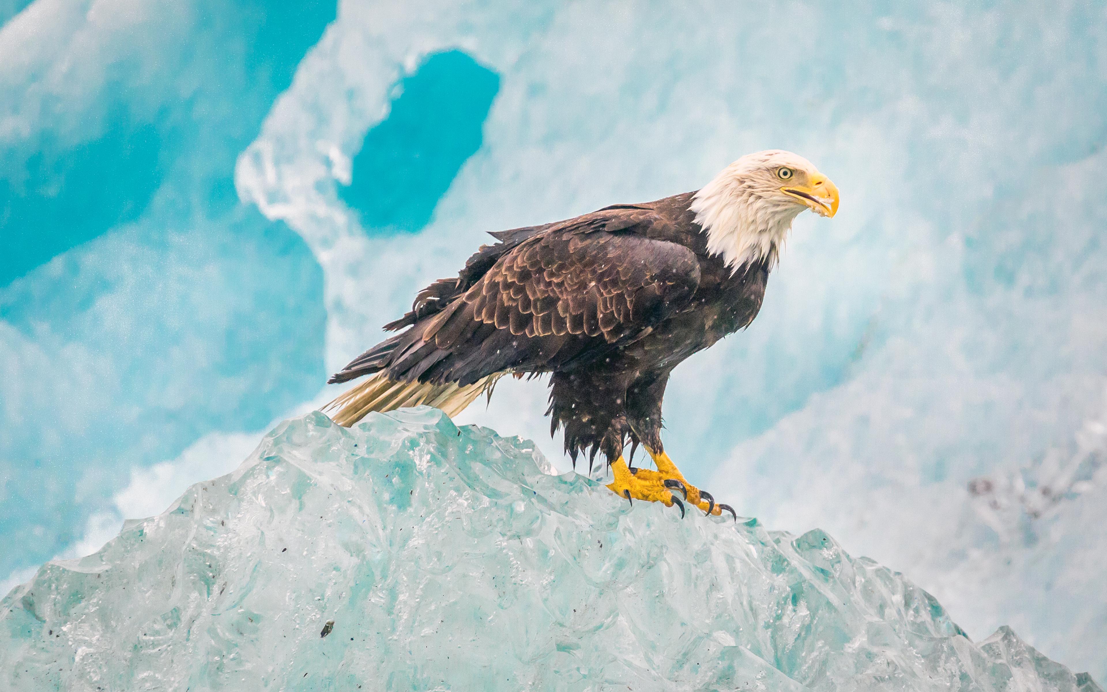 картинки с горными орлами