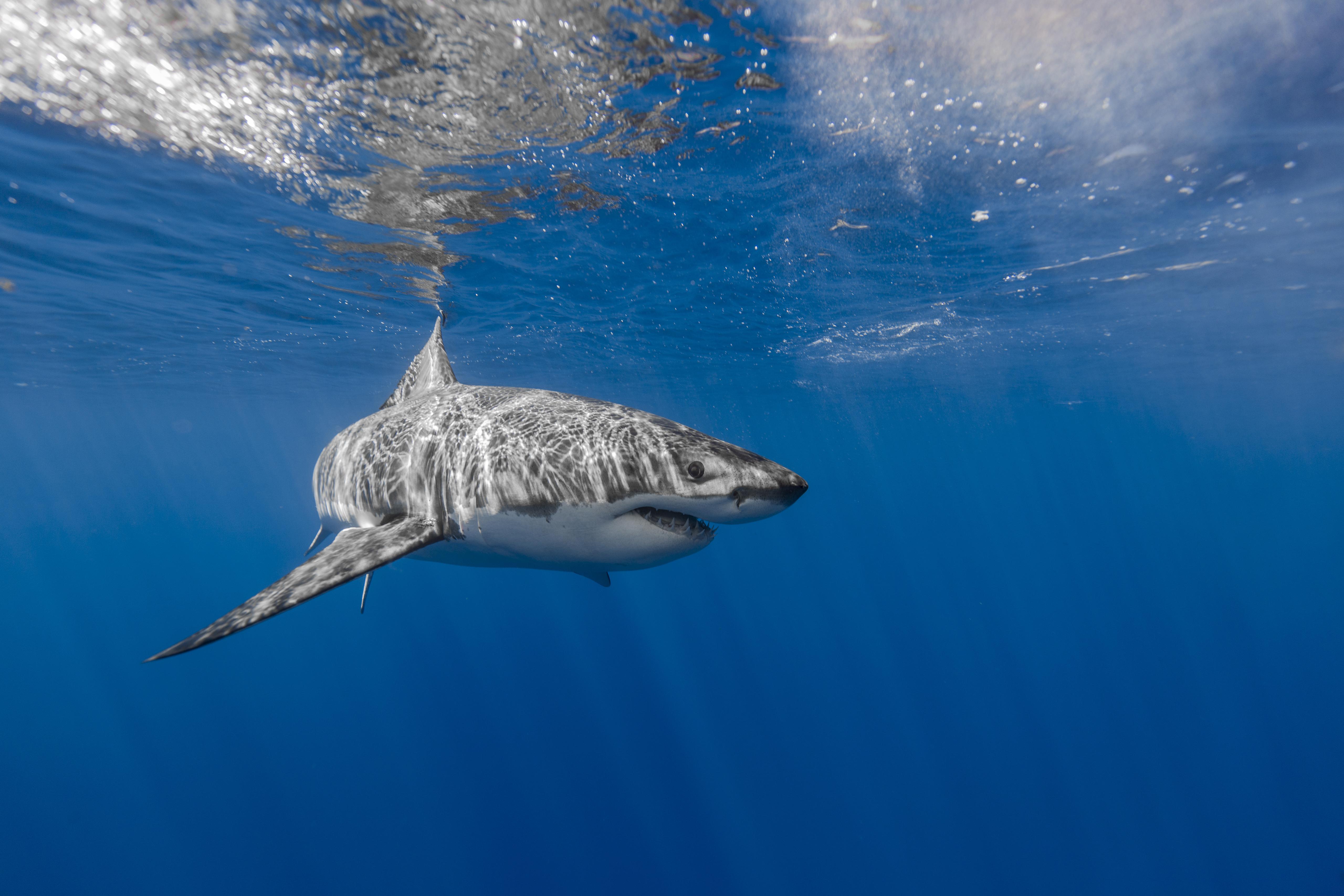 лучшие картинки акул статье