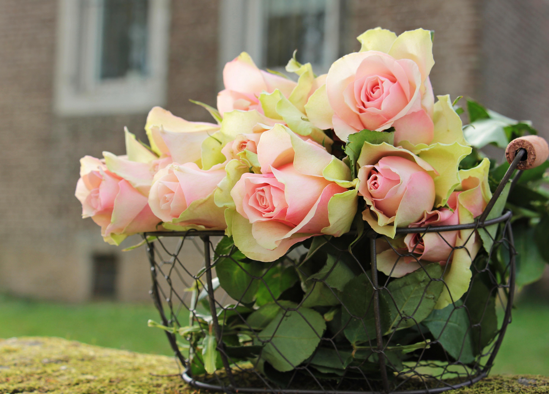 соседа покупные изысканная роза картинки снимки способны растопить