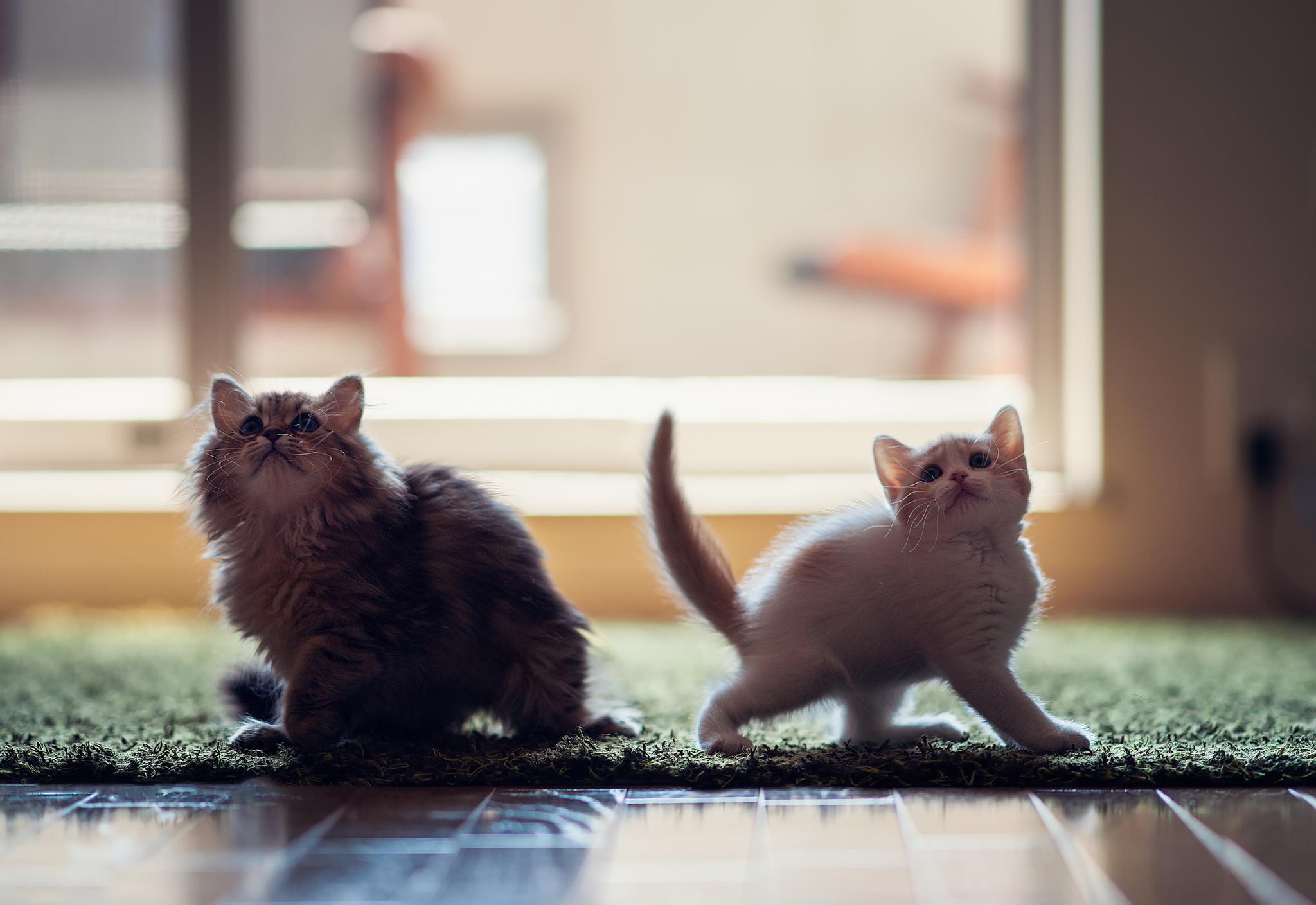 спрашивают мимимишные котята картинки надо кричать