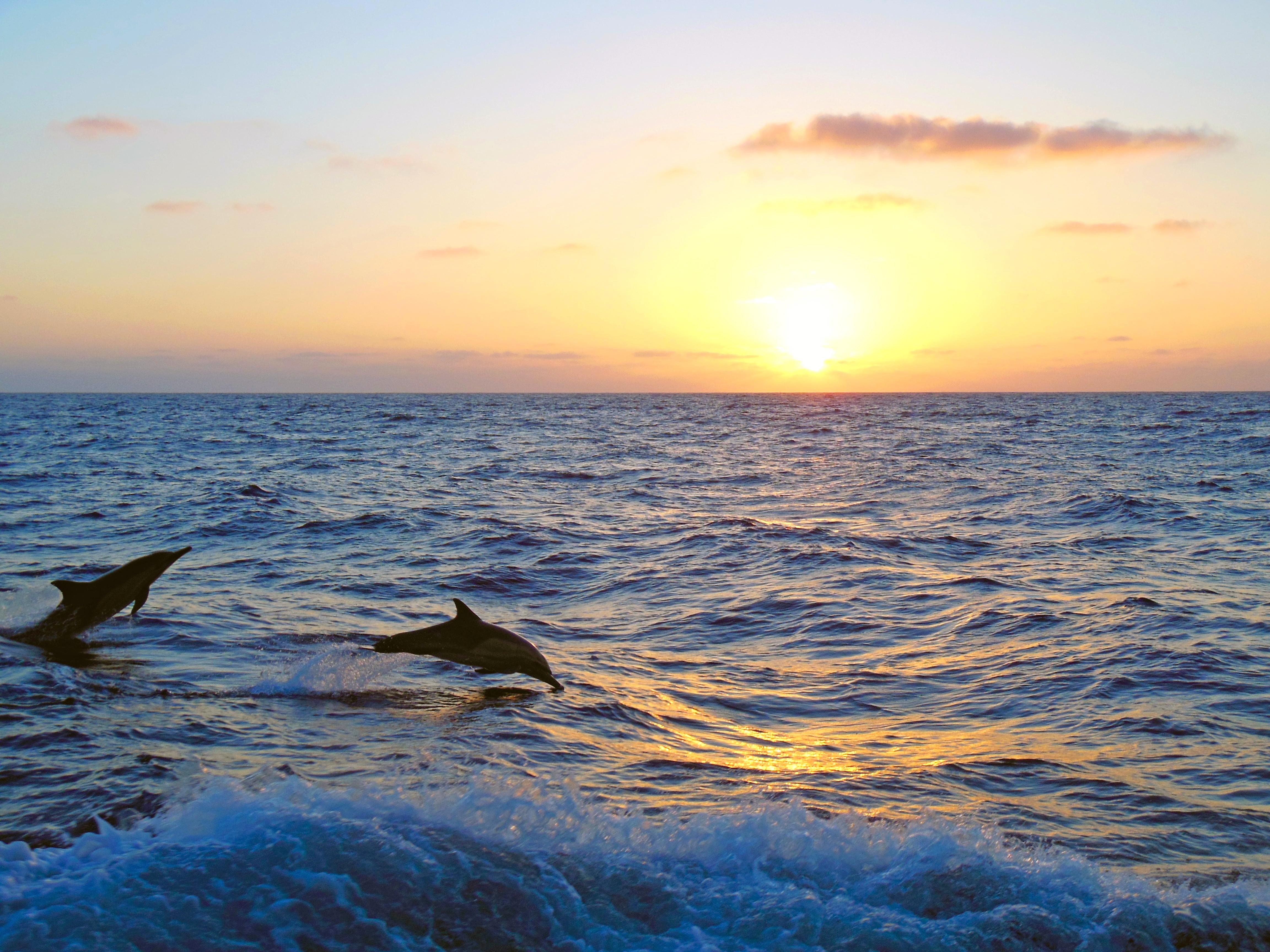 картинки дельфины море солнце нем