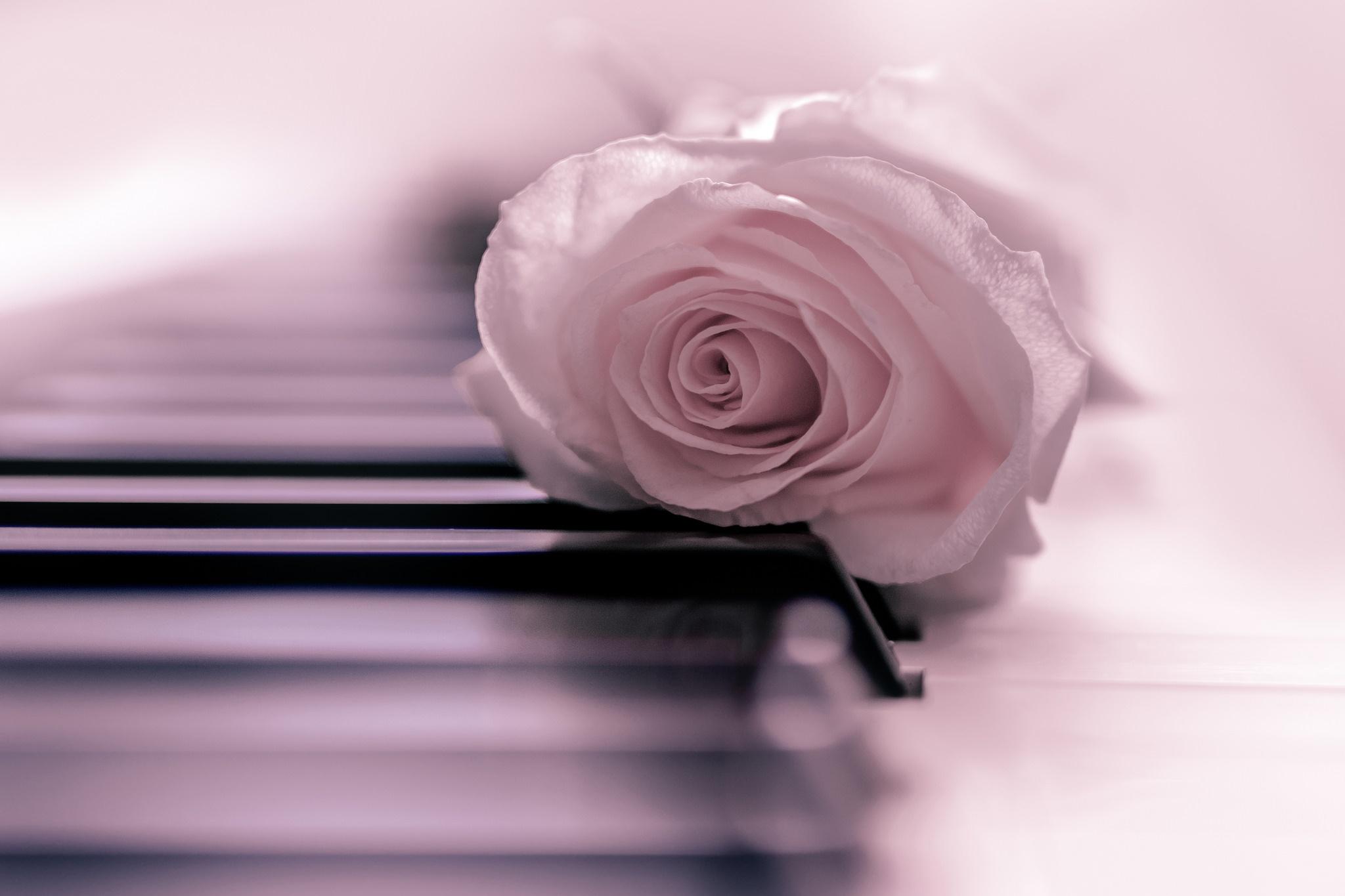 отправляясь прогулку, картинка роза и пианино фотографов
