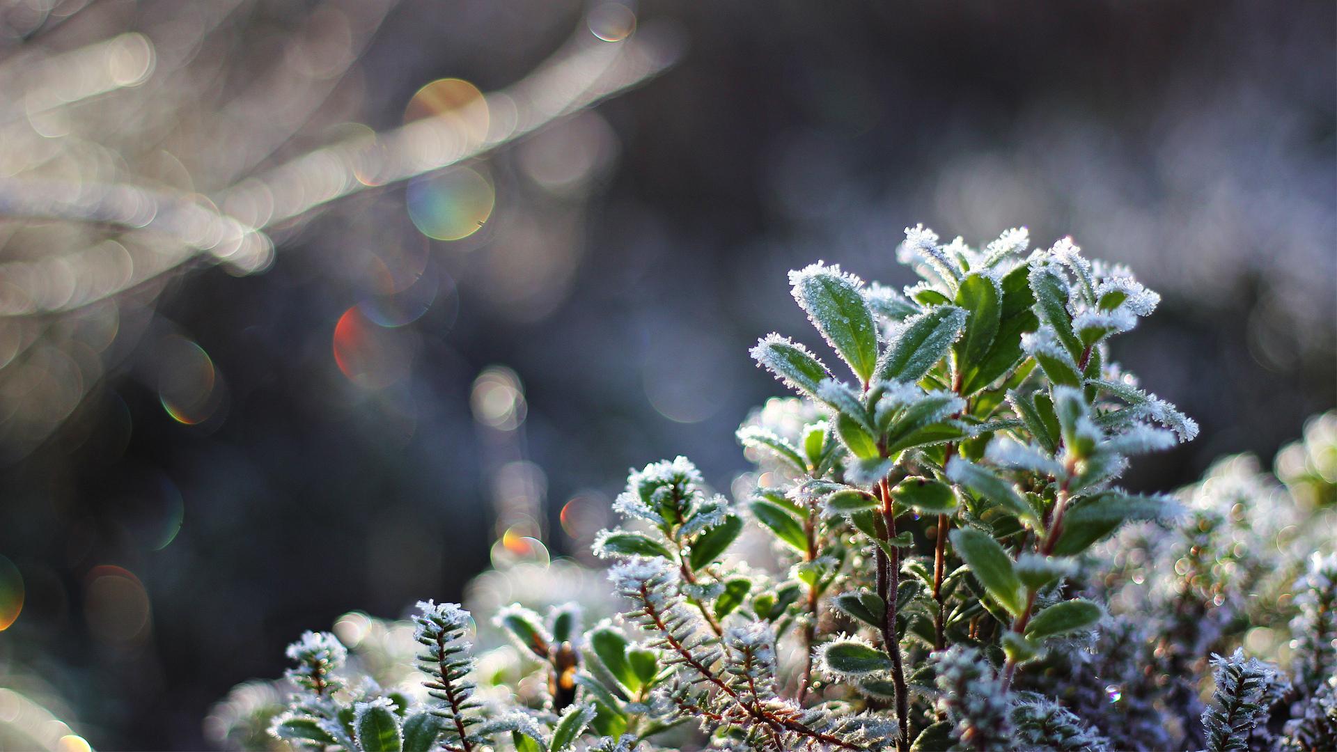 побаивались фото пейзажи зима снег макро изображения вечного огня