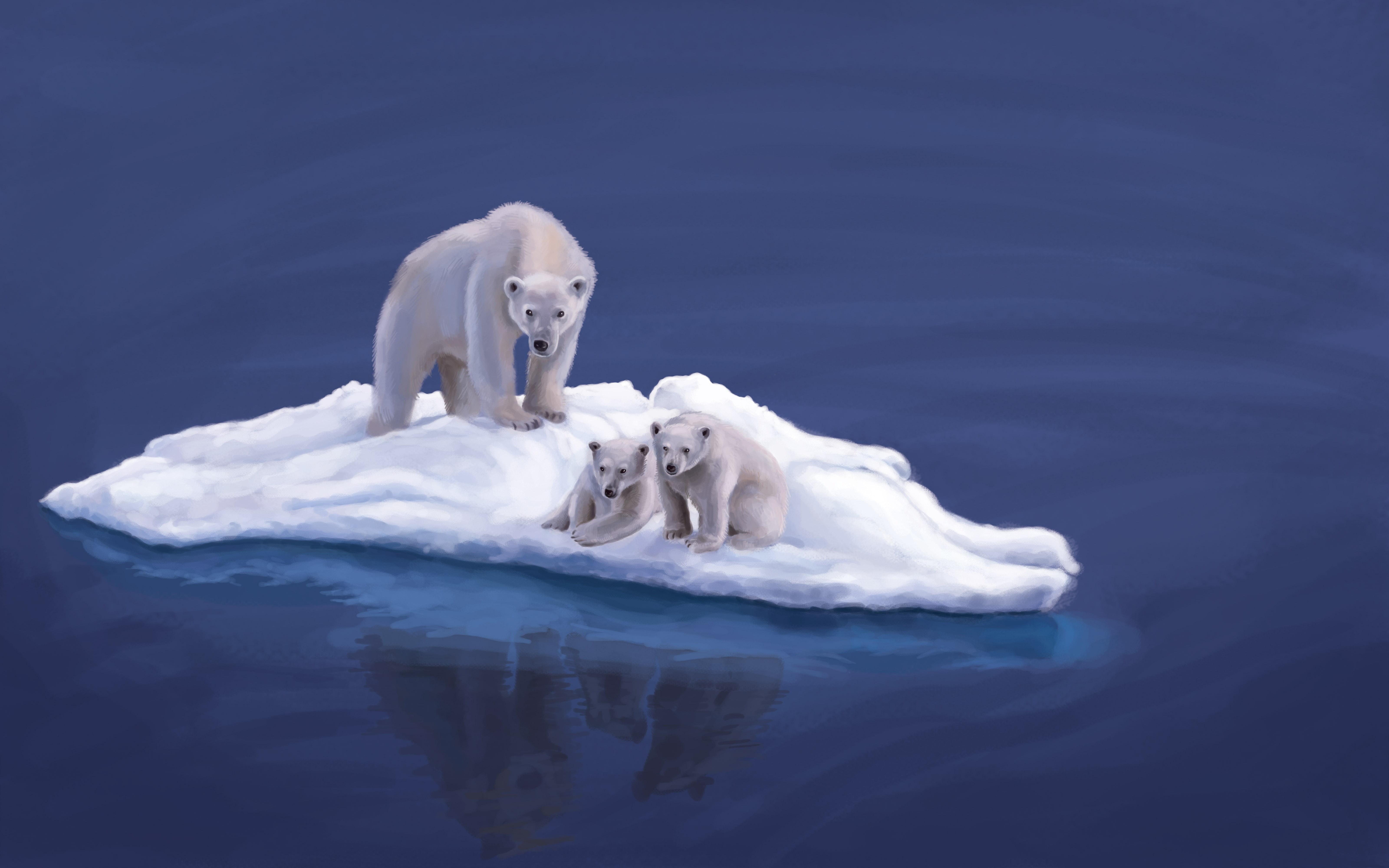 Обои льдина, Медведь, мишка, один. Разное foto 15