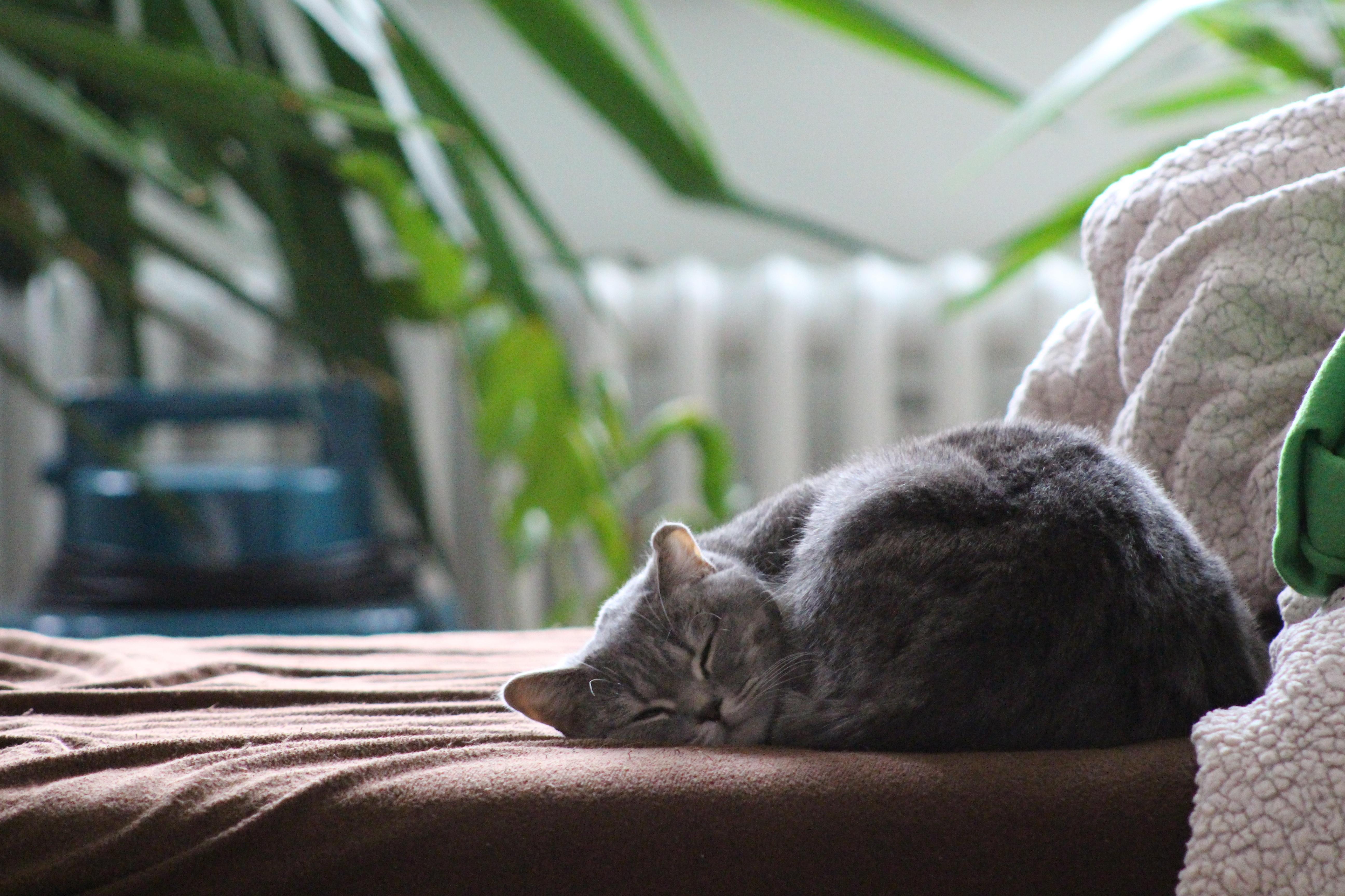 девушки украшают картинки котенок спит на диване блюдо, дополненное