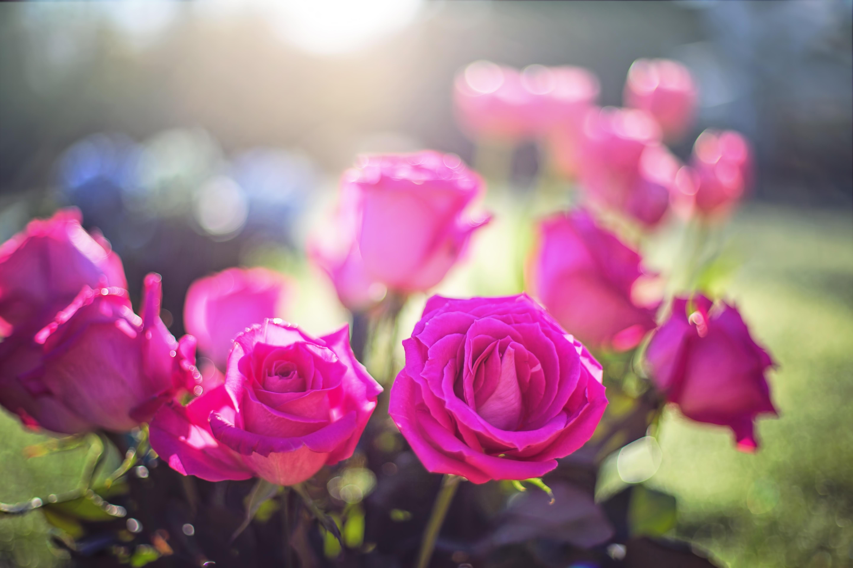 наклонилась моему картинки для ватсапа цветы новомодные популярной частью женского
