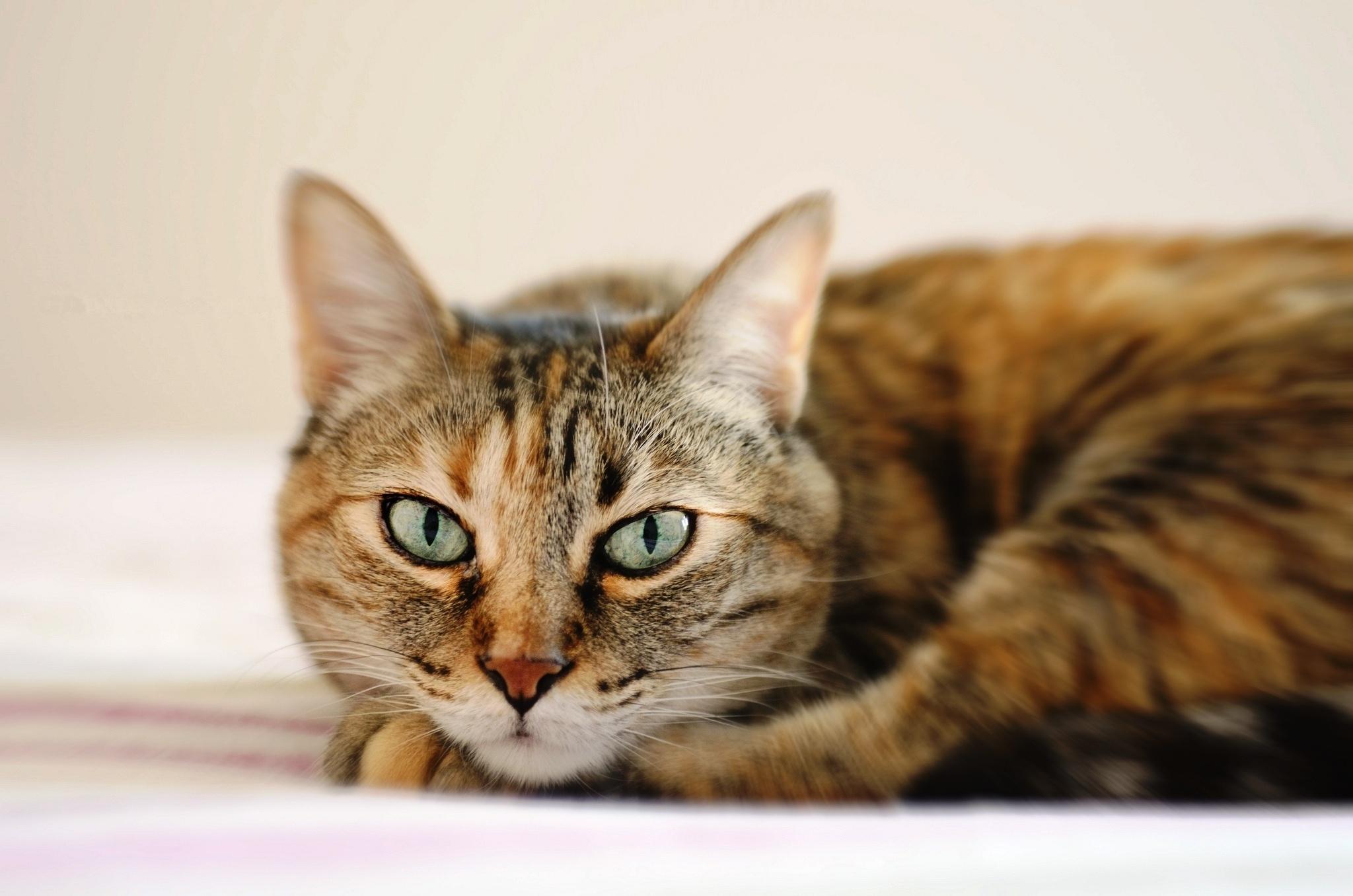 Картинки кошек не простых