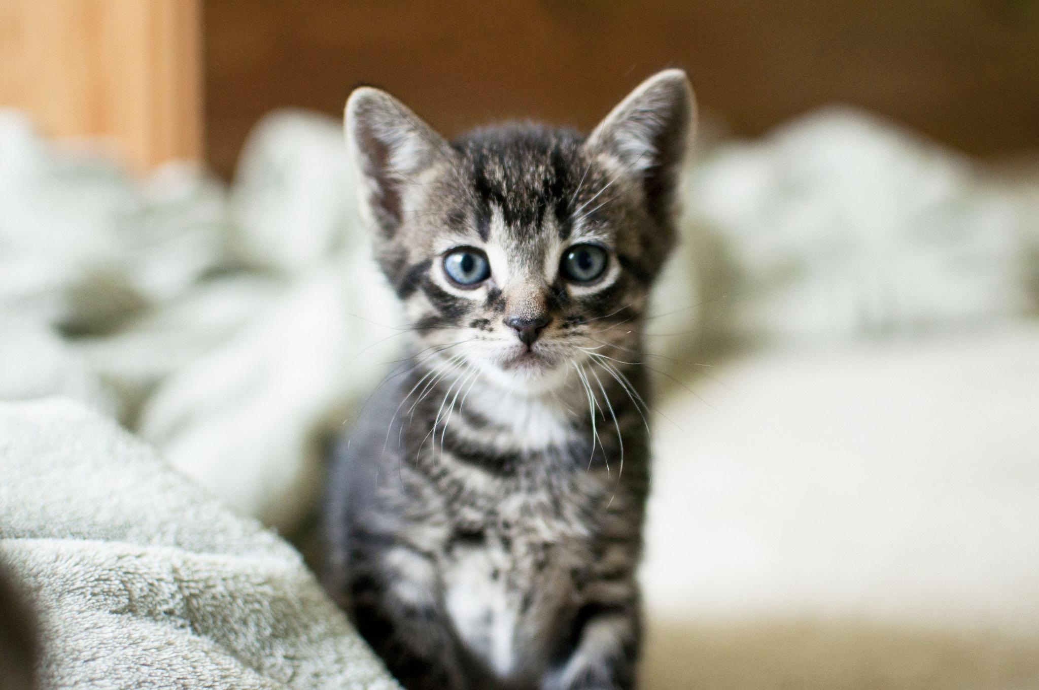 Картинки про маленького котенка