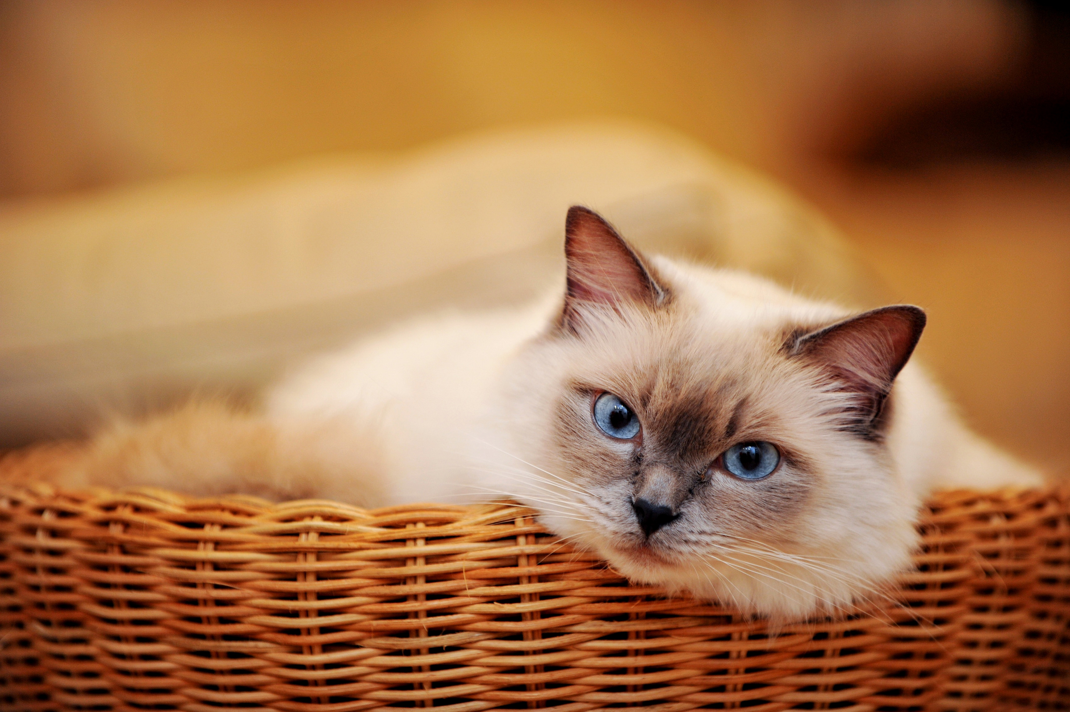Фото котиков на рабочий стол в хорошем качестве