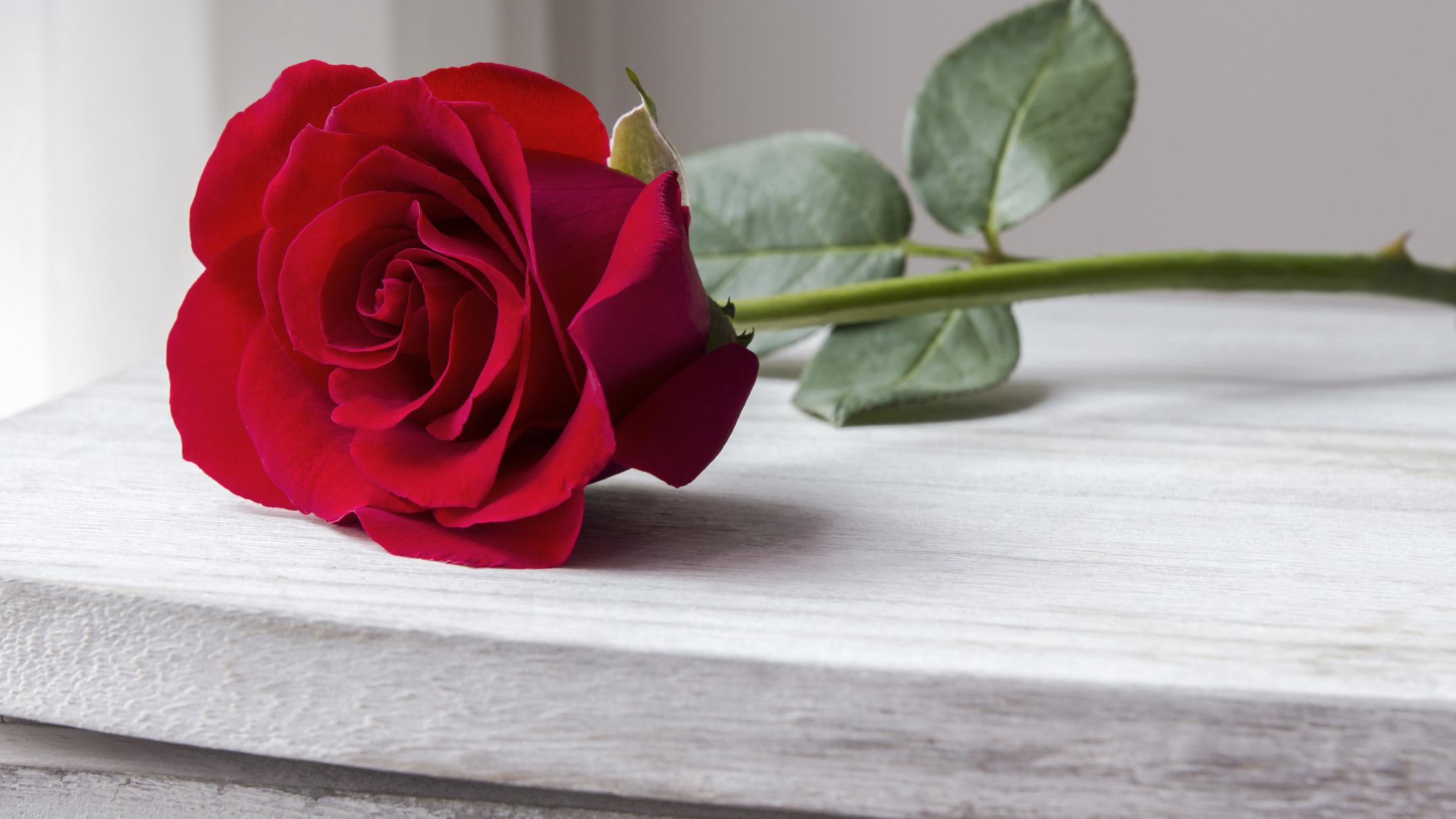 Самые красивые картинки роз на столе
