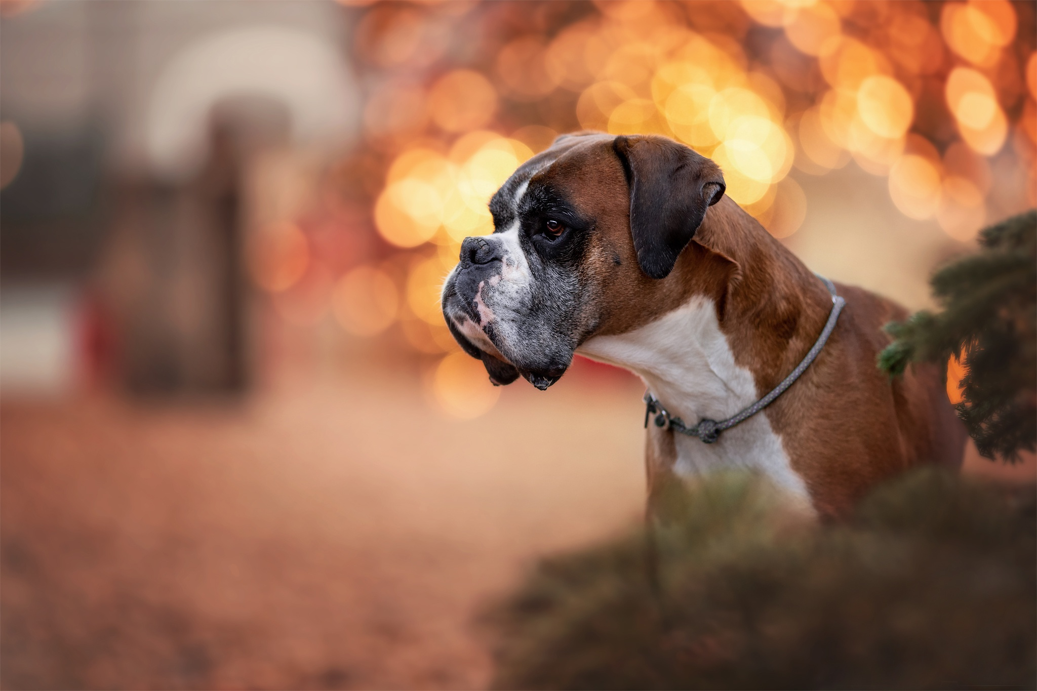 при картинки на рабочий собака боксер год