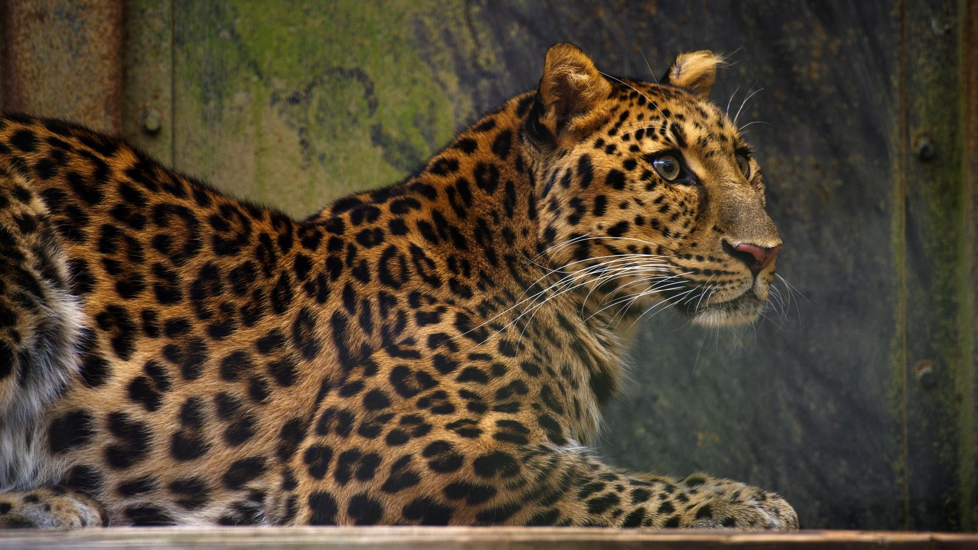 Обои поза, боке, черно-белый, природа, кот, лежит, лето, Кошка, фон, морда, отдых, чёрный, Котя, Kote, желтые глаза, зелены, трава. Кошки foto 11