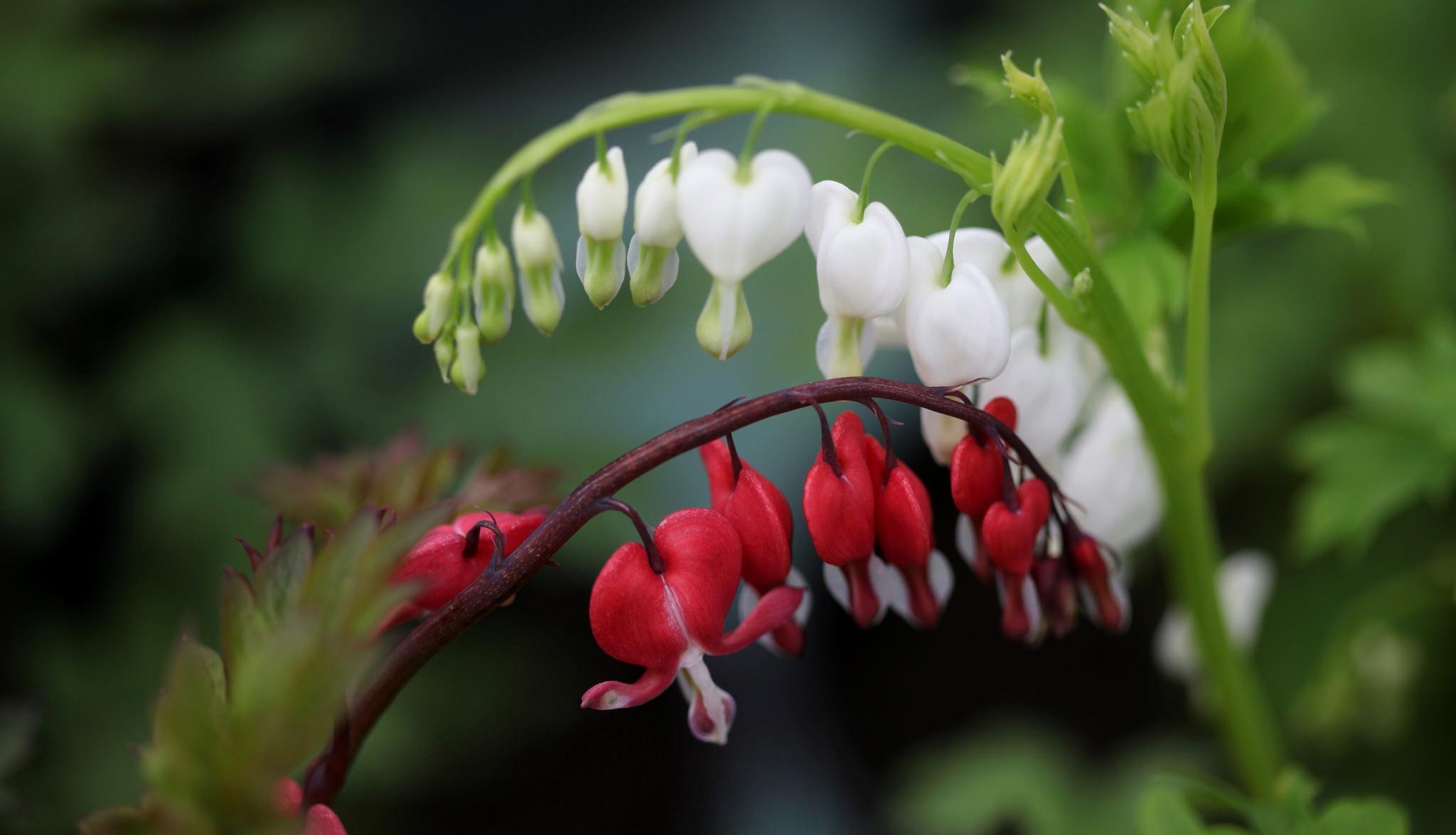 разбитое сердце цветы картинки тех, кому сложно