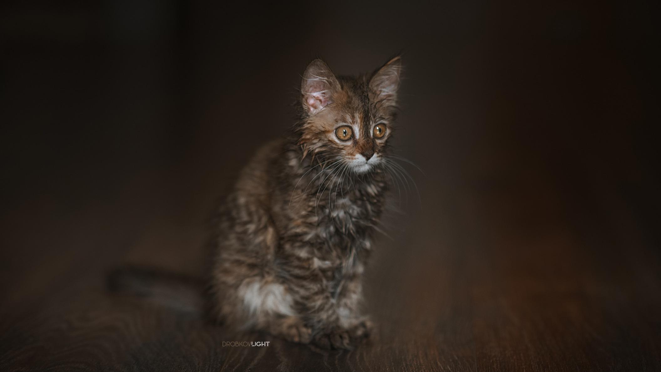 Обои поза, боке, черно-белый, природа, кот, лежит, лето, Кошка, фон, морда, отдых, чёрный, Котя, Kote, желтые глаза, зелены, трава. Кошки foto 18