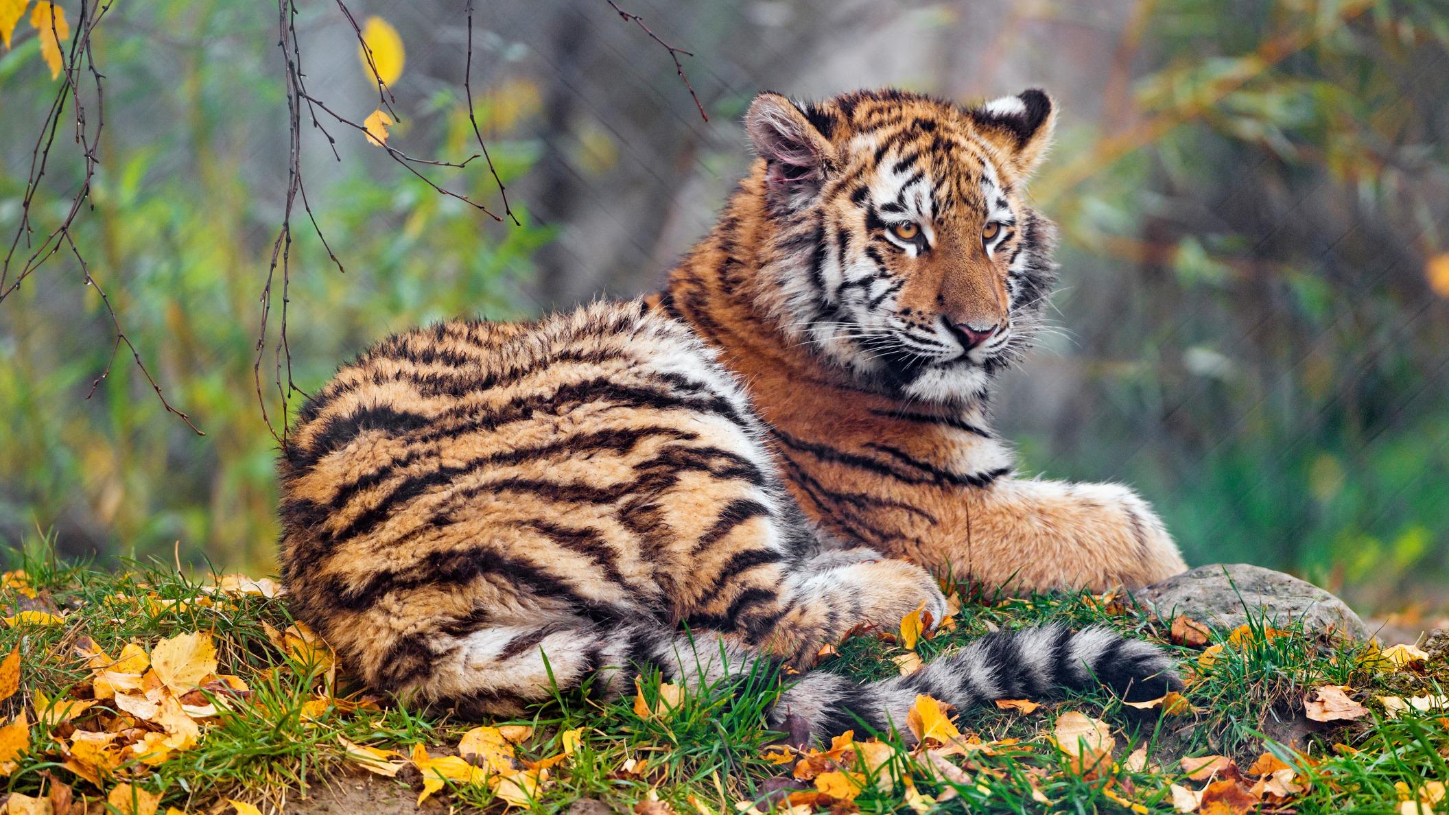 Обои поза, боке, черно-белый, природа, кот, лежит, лето, Кошка, фон, морда, отдых, чёрный, Котя, Kote, желтые глаза, зелены, трава. Кошки foto 13