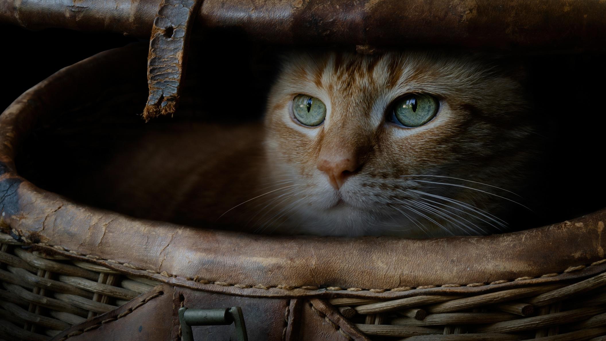 Обои поза, боке, черно-белый, природа, кот, лежит, лето, Кошка, фон, морда, отдых, чёрный, Котя, Kote, желтые глаза, зелены, трава. Кошки foto 14