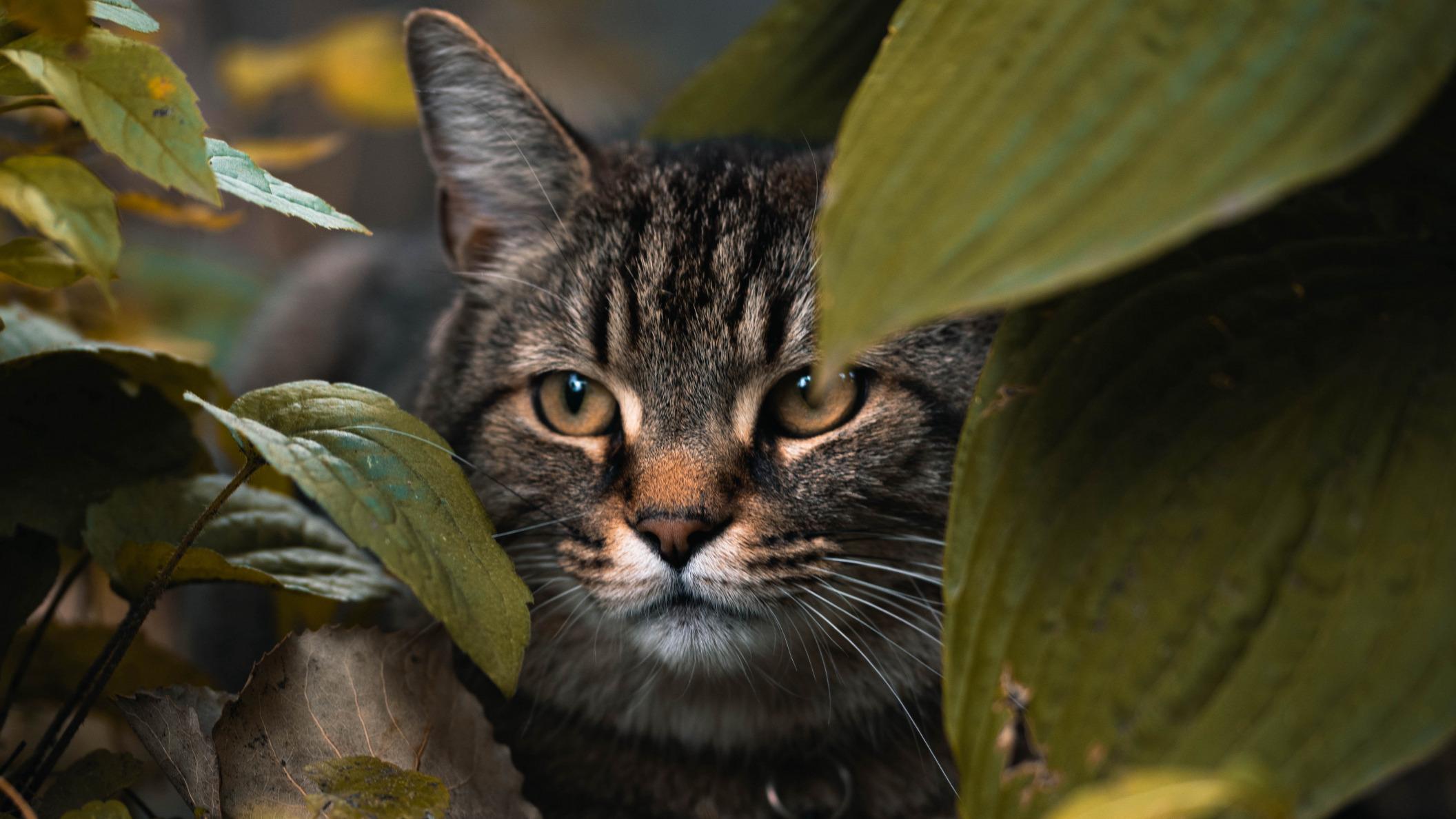 Обои поза, боке, черно-белый, природа, кот, лежит, лето, Кошка, фон, морда, отдых, чёрный, Котя, Kote, желтые глаза, зелены, трава. Кошки foto 9