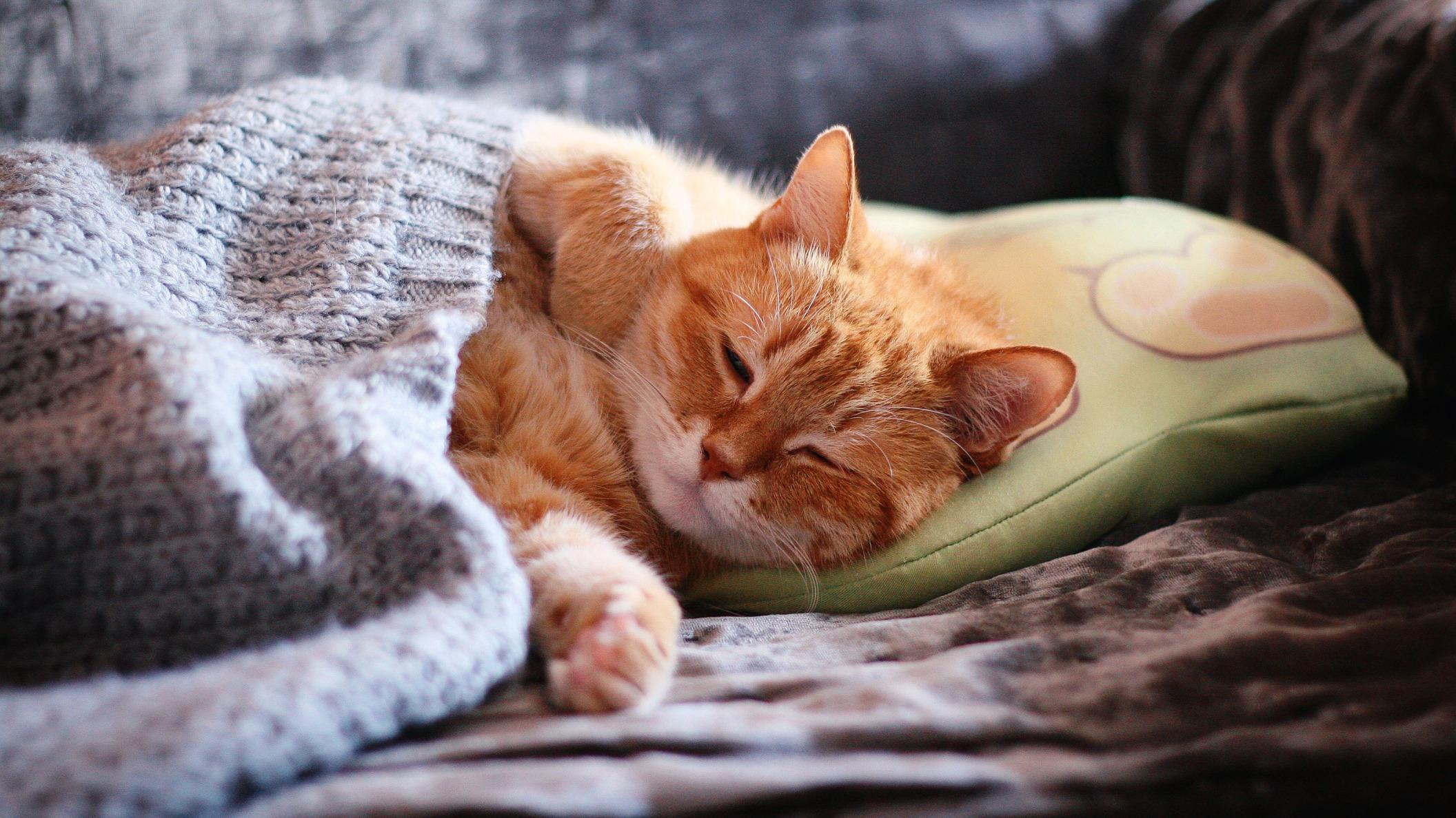 Обои поза, боке, черно-белый, природа, кот, лежит, лето, Кошка, фон, морда, отдых, чёрный, Котя, Kote, желтые глаза, зелены, трава. Кошки foto 16