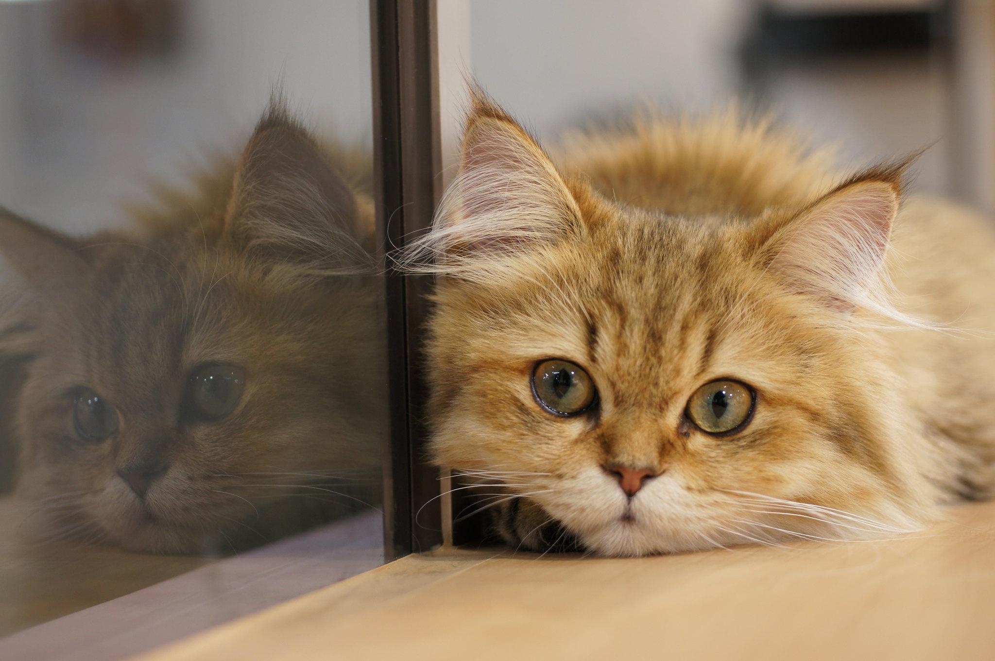 Обои поза, боке, черно-белый, природа, кот, лежит, лето, Кошка, фон, морда, отдых, чёрный, Котя, Kote, желтые глаза, зелены, трава. Кошки foto 10