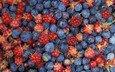 еда, ягоды, лесные ягоды