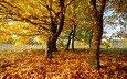 деревья, природа, листья, фото, осень, осенние обои
