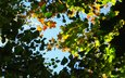 the sky, leaves, branches