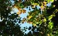 небо, листья, ветки