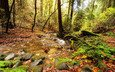 trees, nature, stones, greens, forest, leaves, stream, foliage, autumn, moss