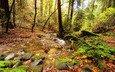 деревья, природа, камни, зелень, лес, листья, ручей, листва, осень, мох