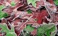 макро, осень, листя