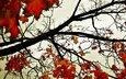 небо, деревья, листья, осень, оранжевый