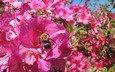 цветок, лето, шмель