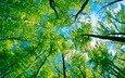 деревья, лес, листва