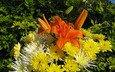букет, хризантема