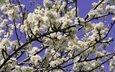 небо, цветы, цветение, растения, макро, ветки, весна