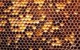 соты, мед, майский мед