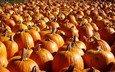 autumn, harvest, vegetables, pumpkin