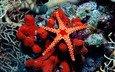 мир, морская звезда, подводный