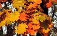 деревья, природа, листья, осень, дуб