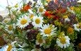 cvety, romashki, makro, buket