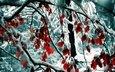 деревья, снег, природа, листья, зима, ветки