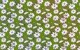 flowers, texture