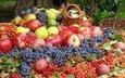 виноград, фрукты, яблоки, ягоды, урожай, груши, сливы, калина